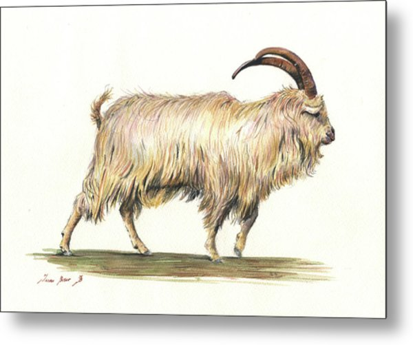Welsh Long Hair Mountain Goat Metal Print