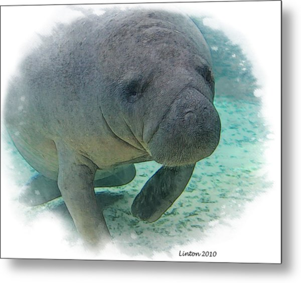 West Indian Manatee Metal Print