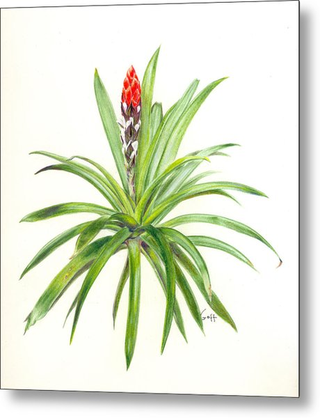West Indian Tufted Air Plant Metal Print