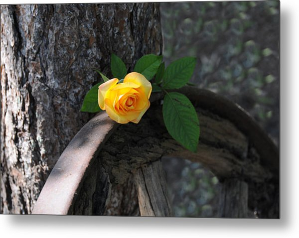 Western Yellow Rose II Metal Print