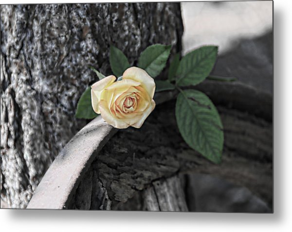 Western Yellow Rose Iv Metal Print