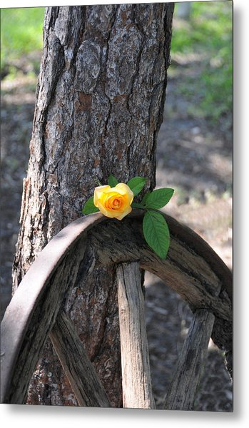 Western Yellow Rose Metal Print
