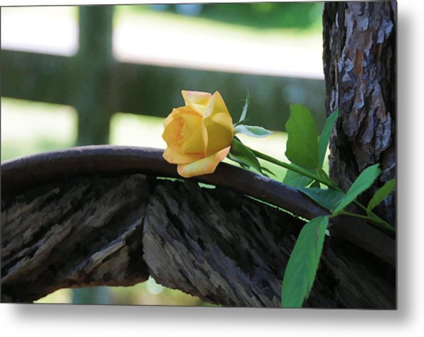 Western Yellow Rose Vii Metal Print