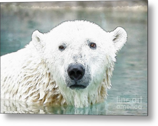 Wet Polar Bear Metal Print