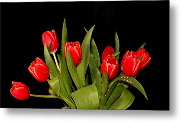Wet Tulips Metal Print