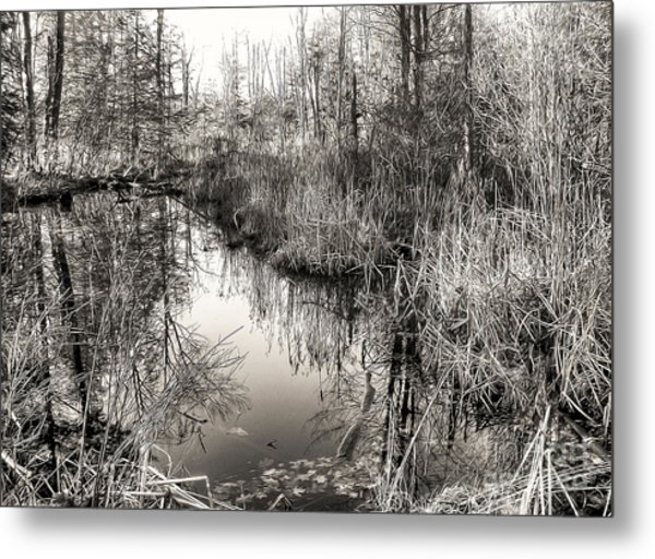 Wetland Essence Metal Print