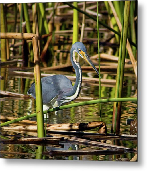 Wetlands Are My Home Metal Print by Dawn Currie
