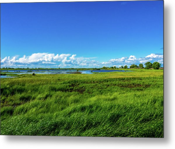 Wetlands On A Windy Spring Day Metal Print