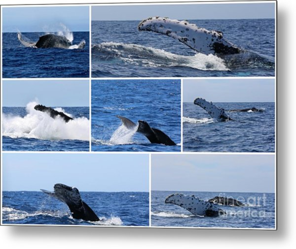 Whale Action Metal Print