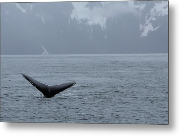 Whale Fluke Metal Print