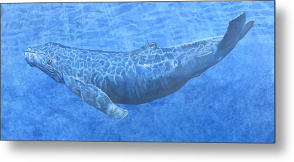 Whale In Surface Light Metal Print