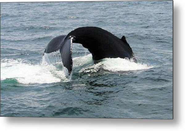 Whale Of A Tail Metal Print