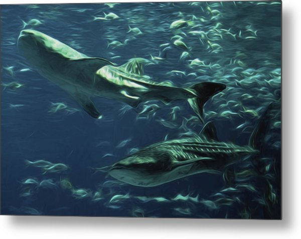 Whale Shark Couple Metal Print