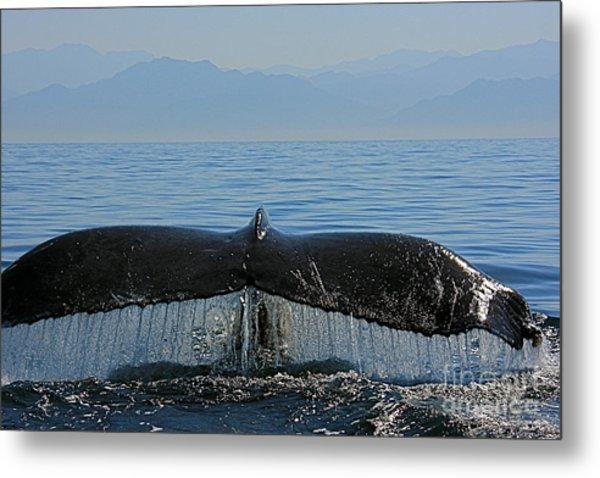 Whale Tail 4 Metal Print