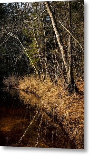 Wharton Forest Fall Metal Print