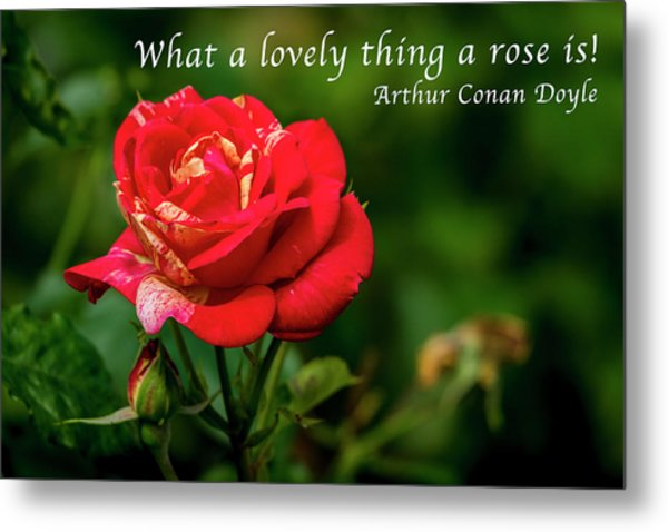 What A Lovely Thing A Rose Is Metal Print