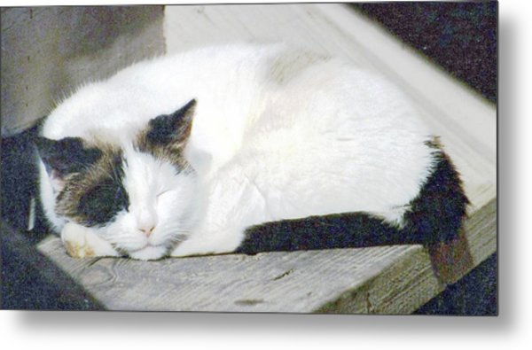 What Do Cats Dream Of #2 Metal Print
