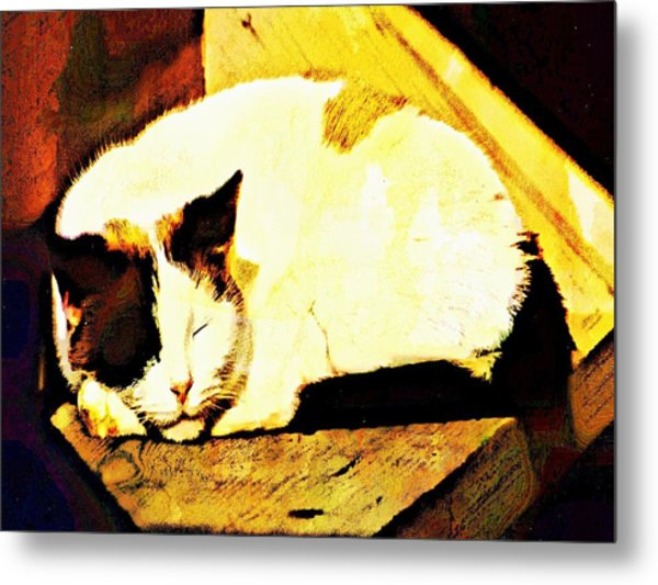 What Do Cats Dream Of Metal Print