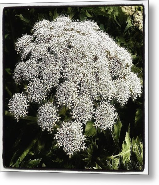 Metal Print featuring the photograph What Flower Is This? I Think It's by Mr Photojimsf