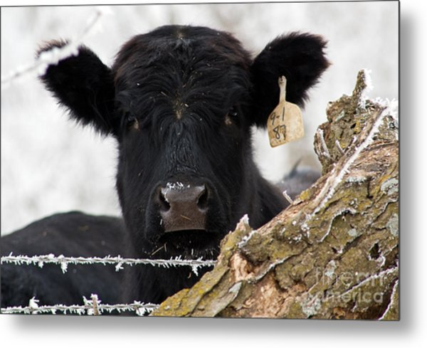 What Frost Metal Print by Fred Lassmann