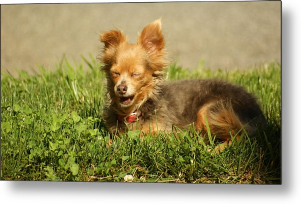 What Is So Funny Metal Print