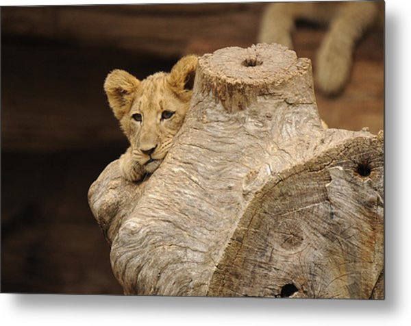 What To Do Metal Print by Keith Lovejoy