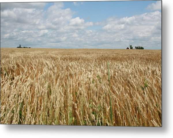 Wheat Farms Metal Print