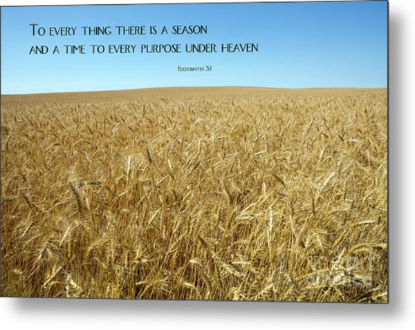 Metal Print featuring the photograph Wheat Field Harvest Season by Steven Frame