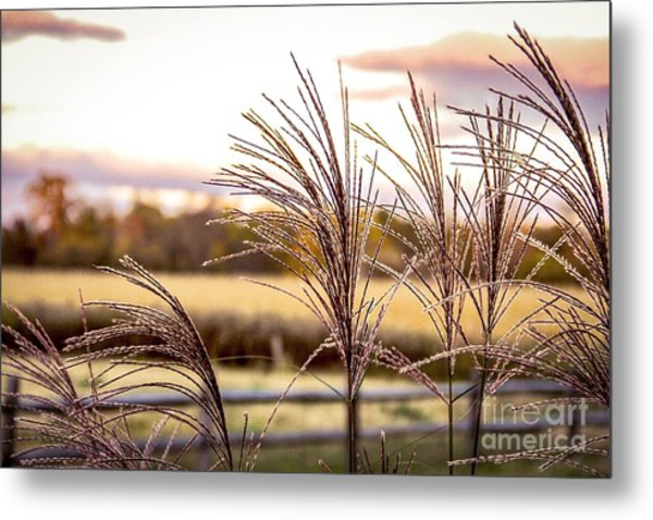 Wheat Sunset Metal Print by Keith Rousseau