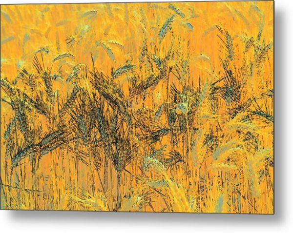 Wheatscape 6343 Metal Print