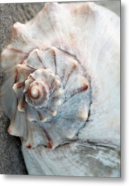 Whelk Metal Print
