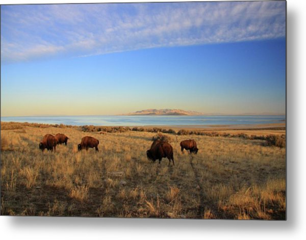 Where The Buffalo Roam Metal Print by Gene Praag