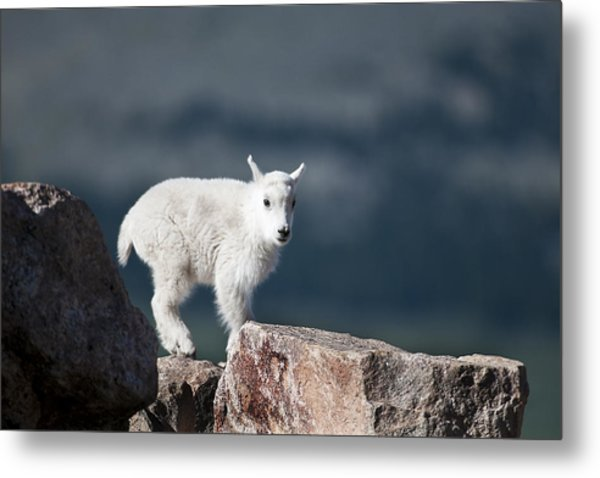 Metal Print featuring the photograph Where's Mom? by Gary Lengyel