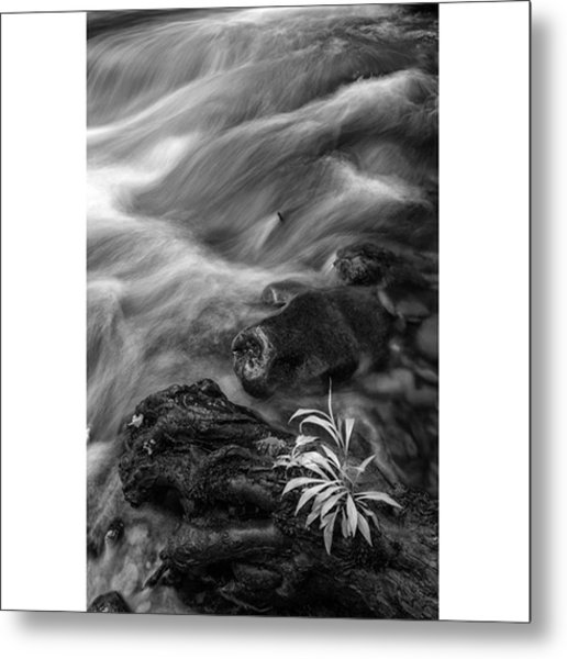 While Standing Next To A Stream I Metal Print