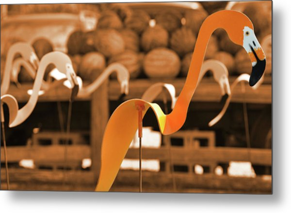 Whimsy In Orange Metal Print by JAMART Photography