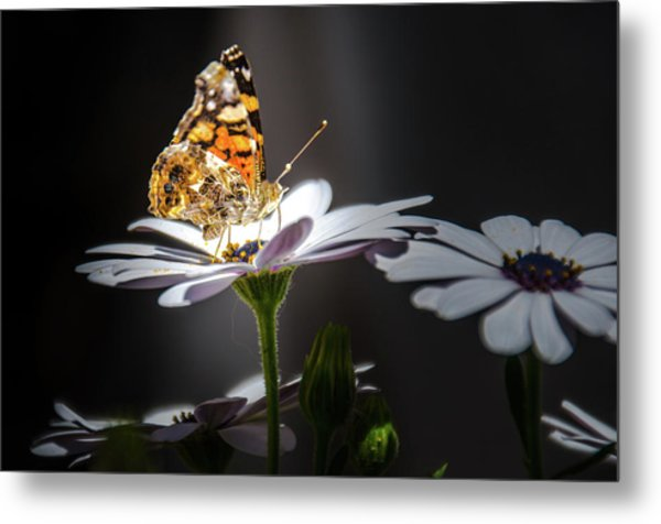 Whispering Wings II Metal Print