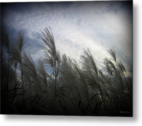 Whispers In The Wind Metal Print by Trina Prenzi