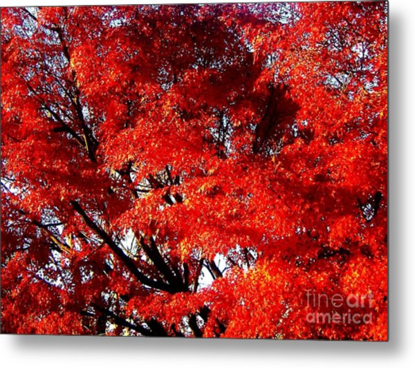 Whispers Of A Japanese Maple Metal Print by Juliette Carter-MarShall