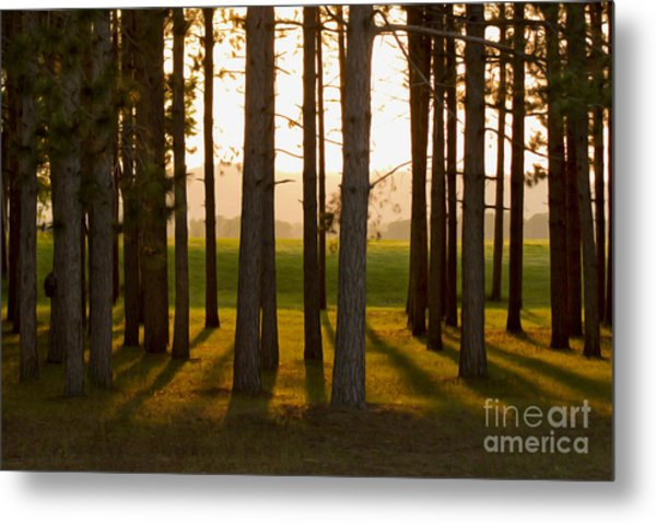 Whispers Of The Trees Metal Print