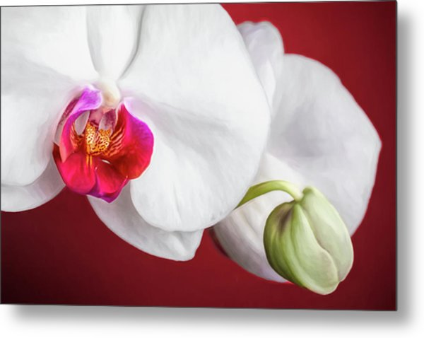 White And Red Orchids Metal Print