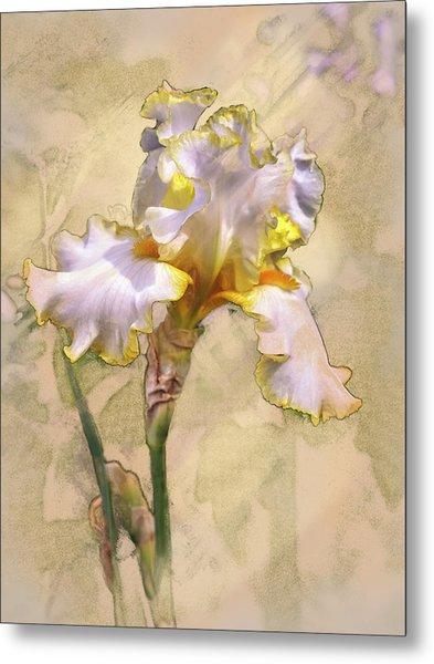 White And Yellow Iris Metal Print