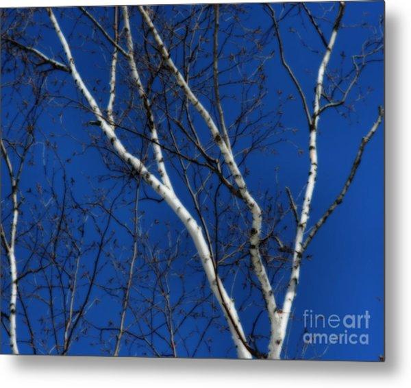 White Birch Blue Sky Metal Print