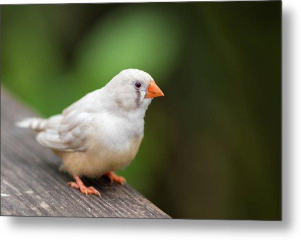 White Bird Standing On Deck Metal Print