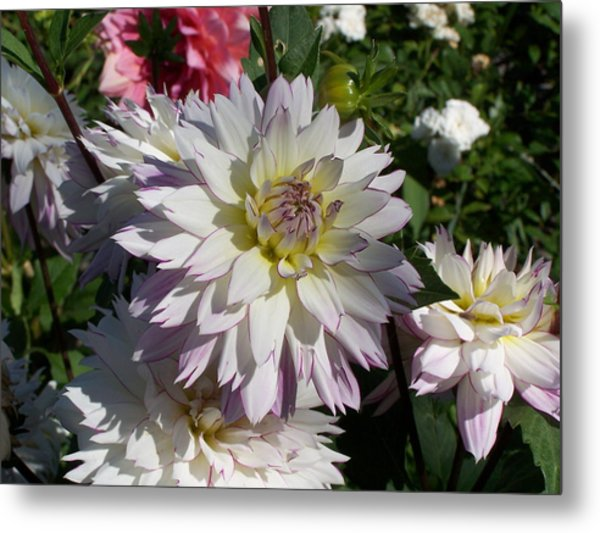 White Bloom Metal Print by Colleen Neff