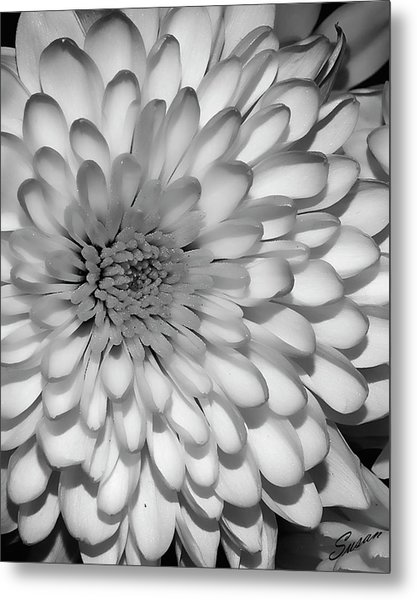 White Bloom Metal Print