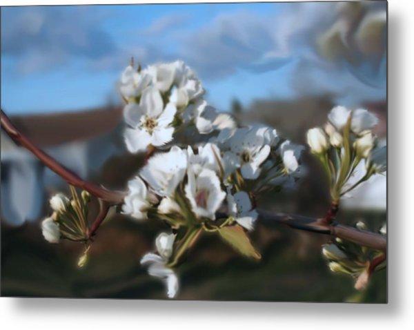 White Blossoms Metal Print by Robert Bewick