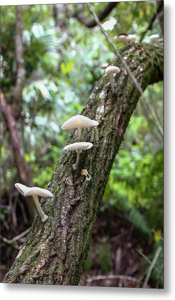 White Deer Mushrooms Metal Print