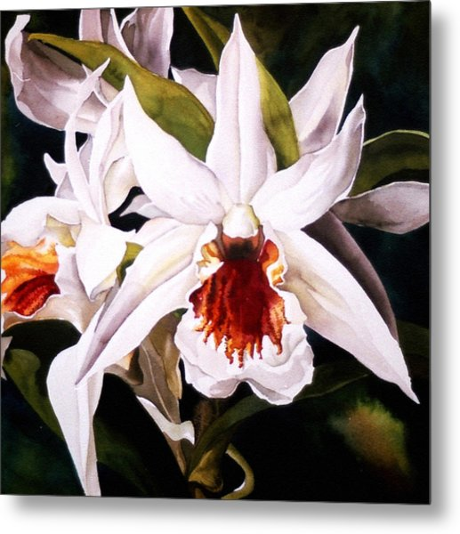 White Dendrobium Orchid Metal Print