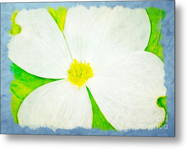 White Dogwood Bloom Metal Print