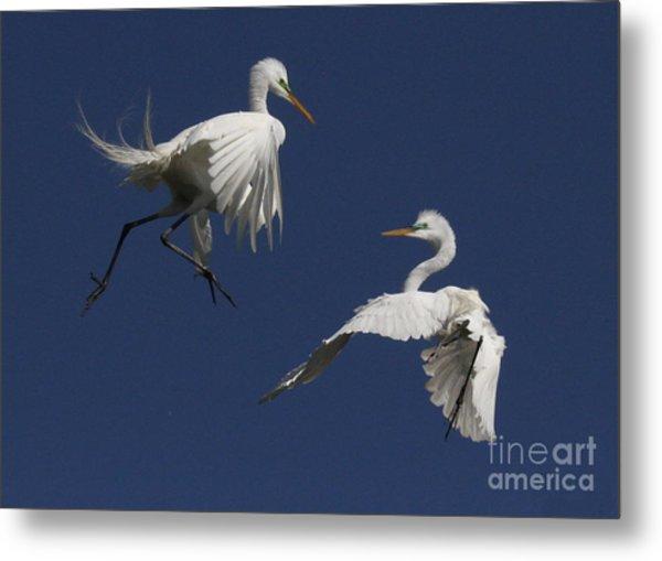White Egret Ballet Metal Print